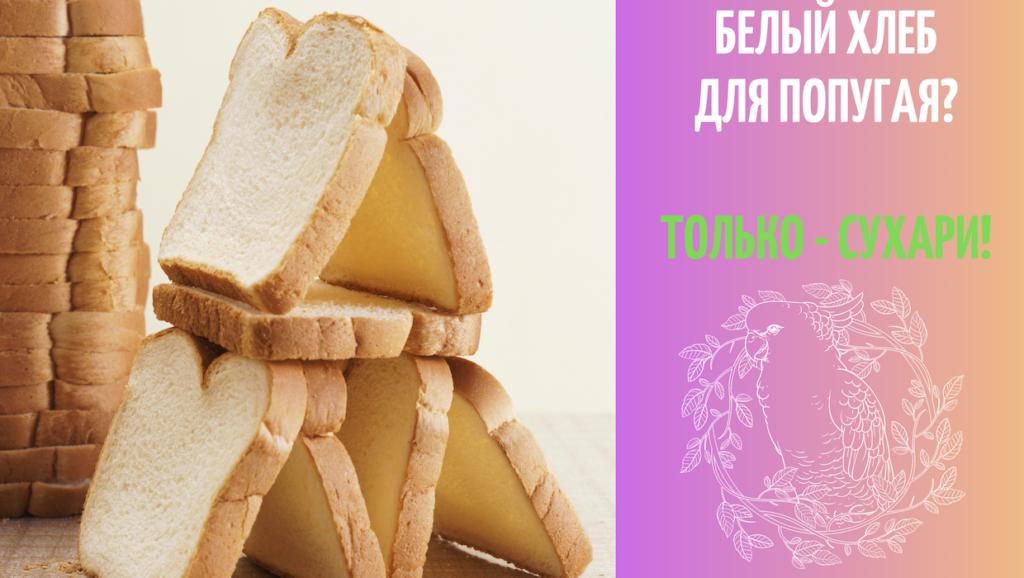 Можно ли кормить попугая хлебом белым