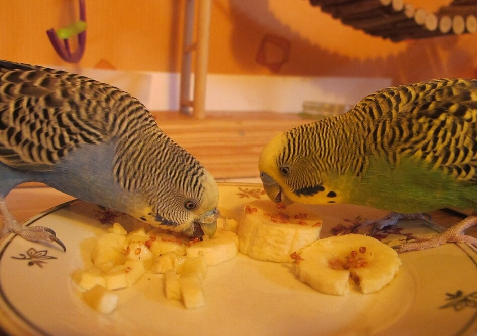 Банан для попугая