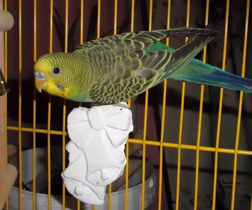 Мелок для попугая
