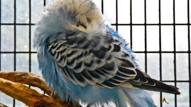 Как спят попугаи