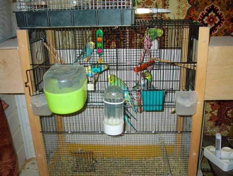 как ухаживать за волнистым попугаем в домашних условиях