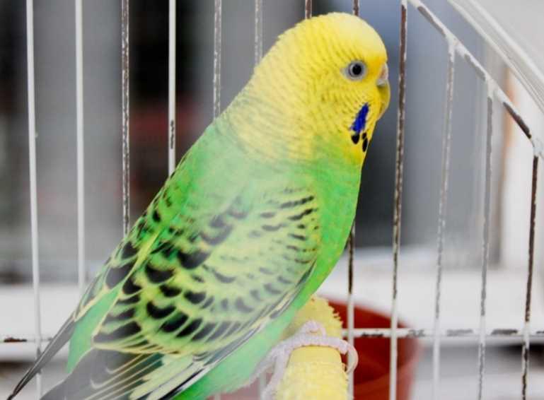 как поймать попугая на улице