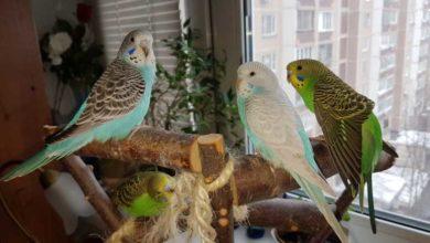 Имена для попугаев