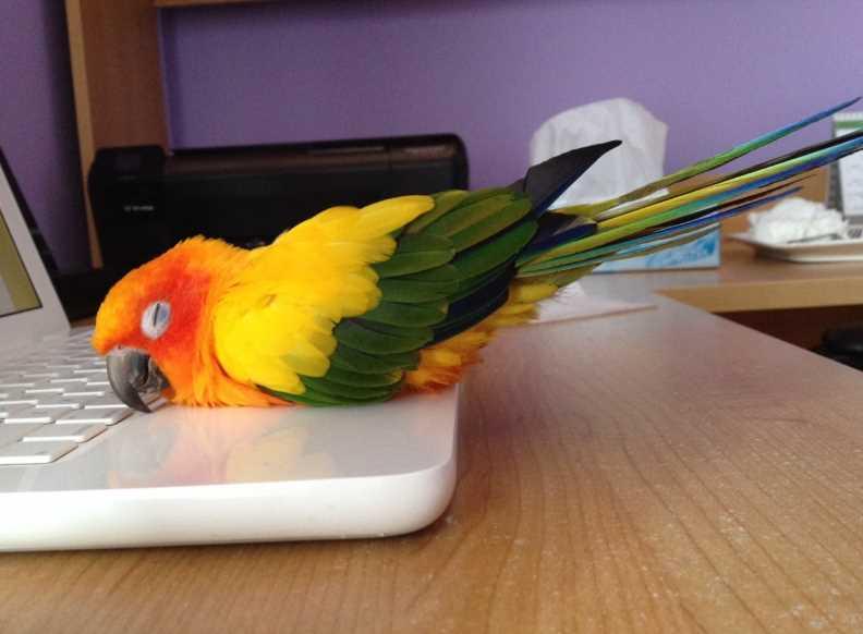 во сколько попугаи ложатся спать