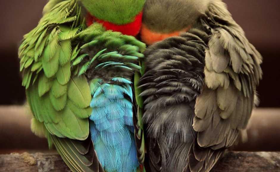 сколько должен спать волнистый попугай