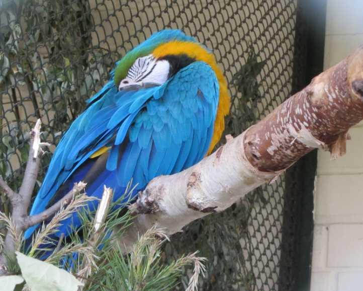 во сколько ложиться спать волнистым попугаем