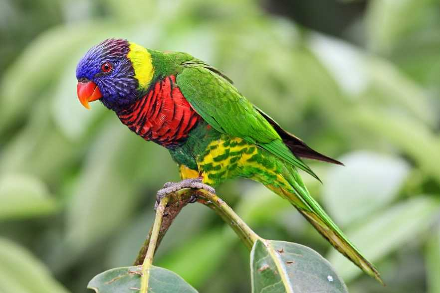 виды попугайчиков