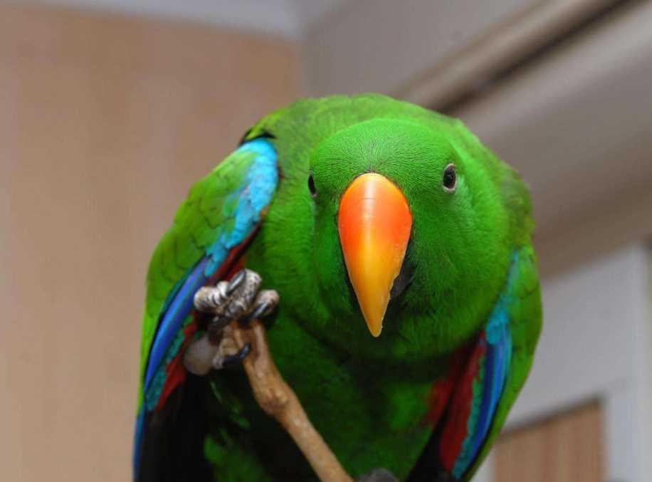 названия попугаи виды