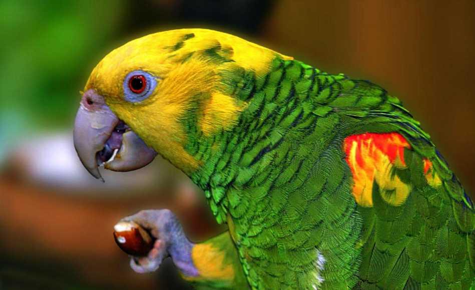 бывают какие виды попугаев