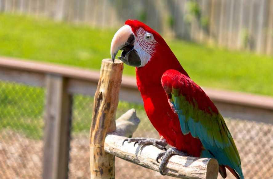 попугаев разновидности