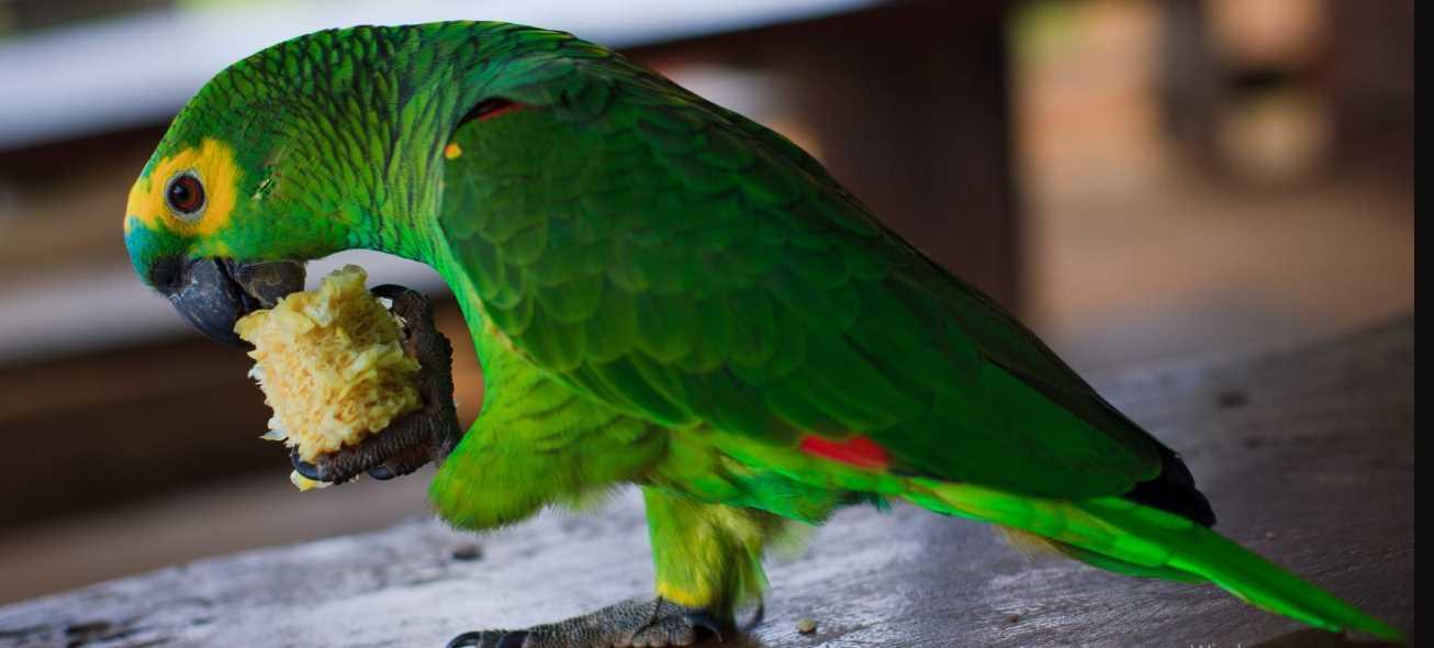 попугай поносит что делать