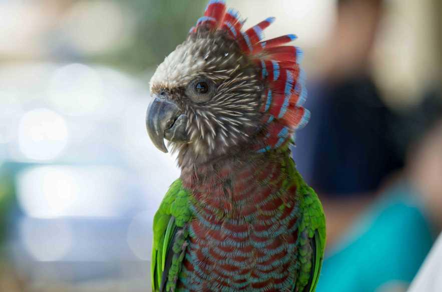 маленьких попугаев породы