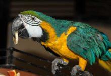 Photo of Попугай ара в домашних условиях