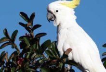 Photo of Попугай какаду
