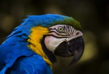 Photo of Попугай Ара