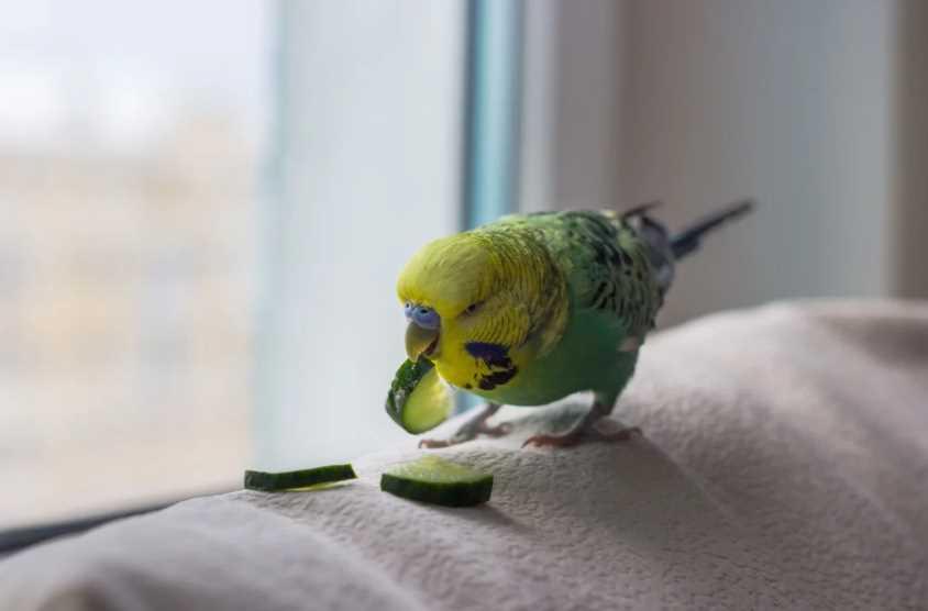 можно ли попугаю банан