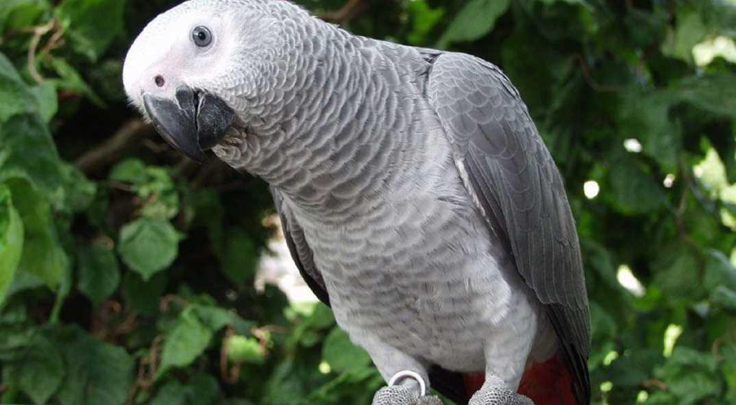 все виды попугаев