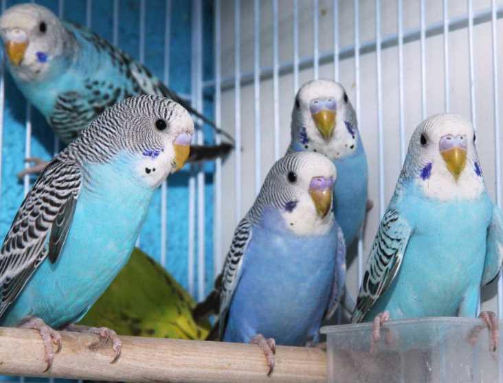 что дать попугаю от поноса