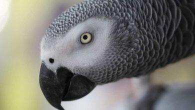 Photo of Попугай Жако