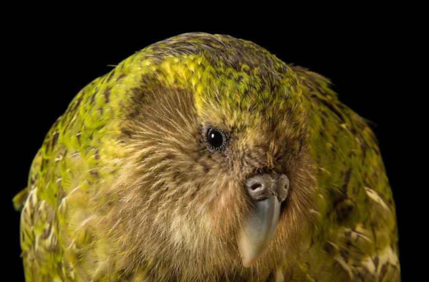 попугай домашний виды