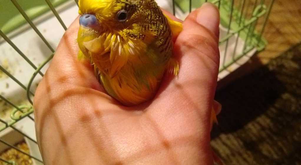 попугай профилактика болезней