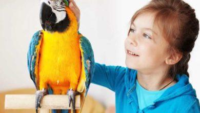 Photo of Виды попугаев для домашнего содержания
