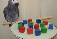 Photo of Какая порода попугаев самая умная