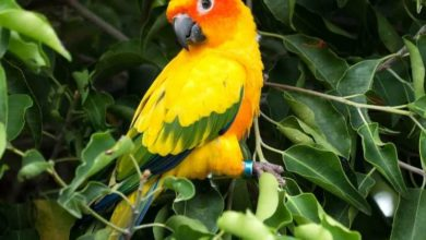 Photo of Солнечный аратинга — описание попугайчика