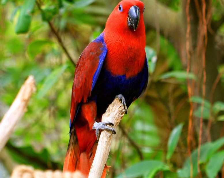 благородный зелено красный попугай