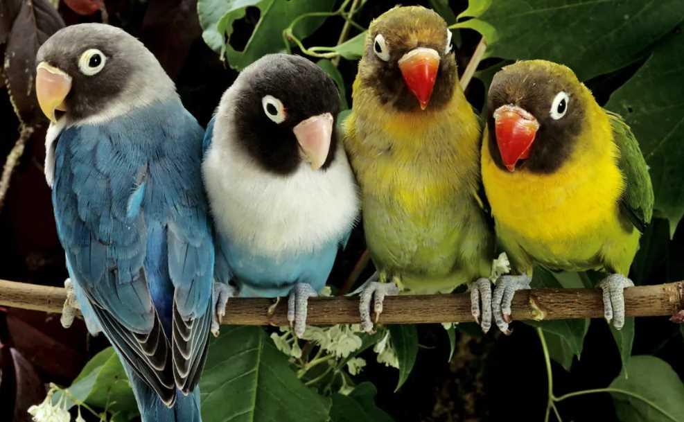 Сколько стоит попугай
