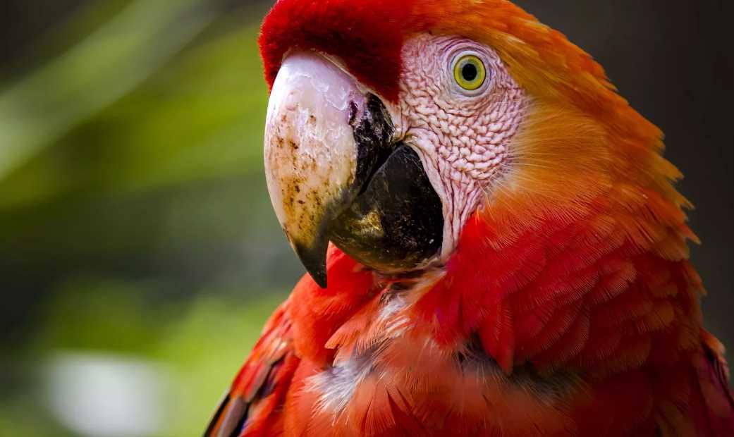 самый большой попугай в мире название
