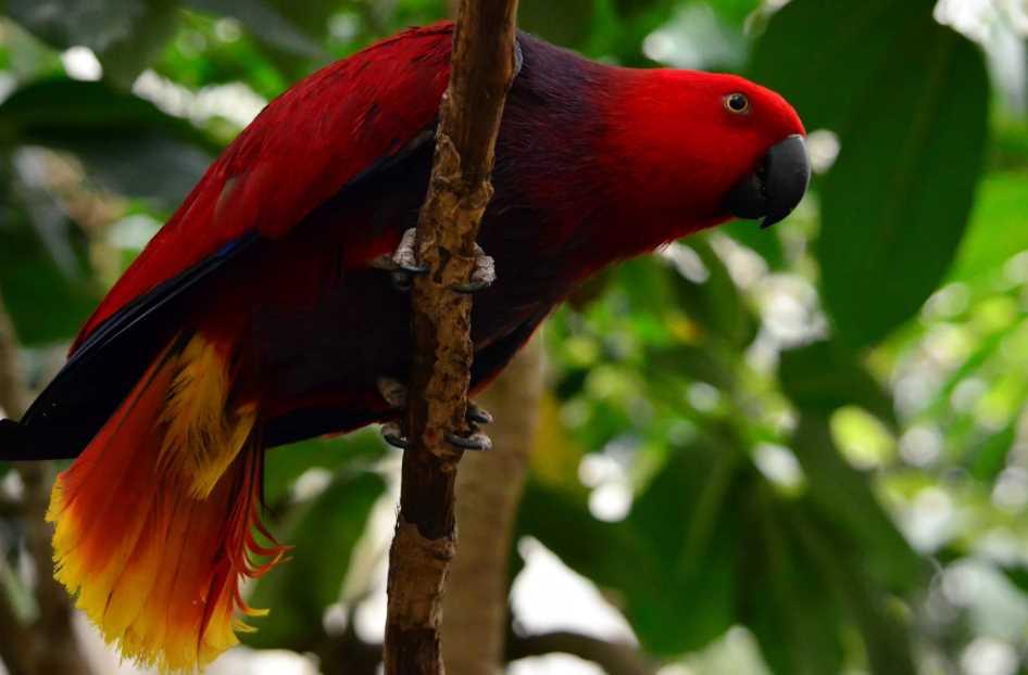 благородный зелено попугай