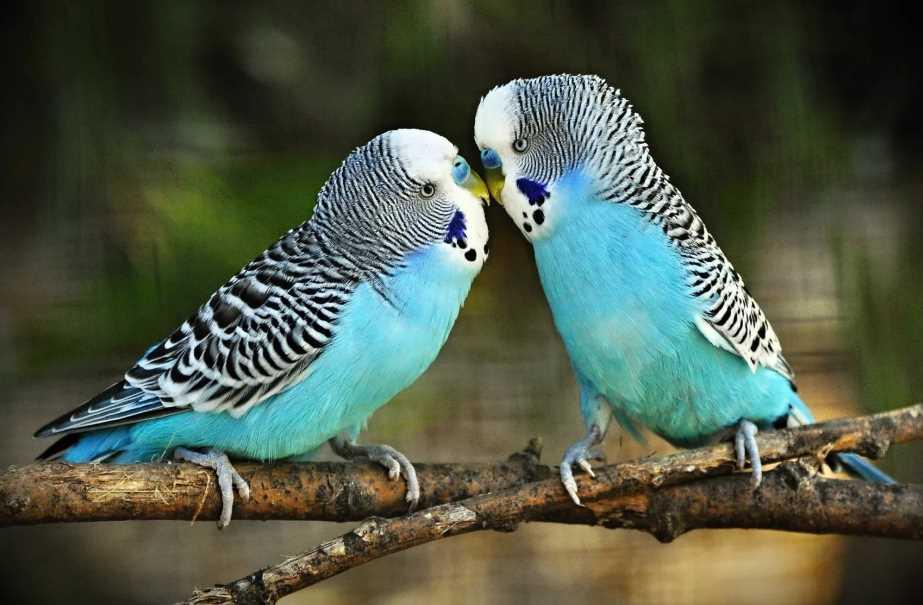какие бывают попугаи