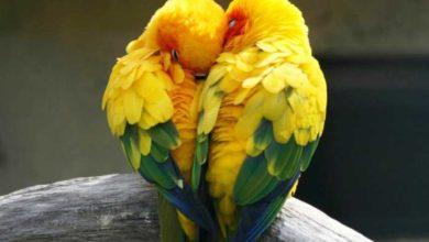 Зачем попугаи вставляют бумагу в хвост