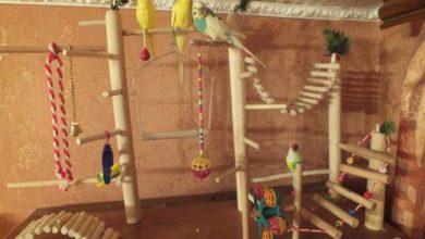 Photo of Игровой стенд для попугаев своими руками