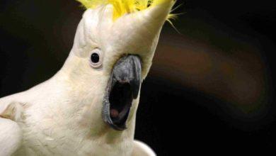Photo of Почему попугай постоянно кричит?