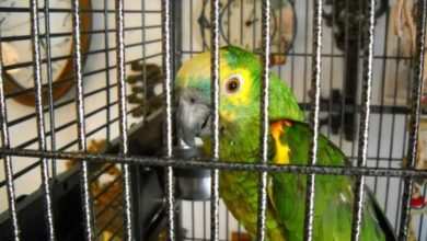 У попугая зелёный помёт