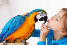 Photo of Самые говорящие породы попугаев