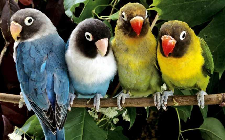 вставляет в хвост бумагу попугай