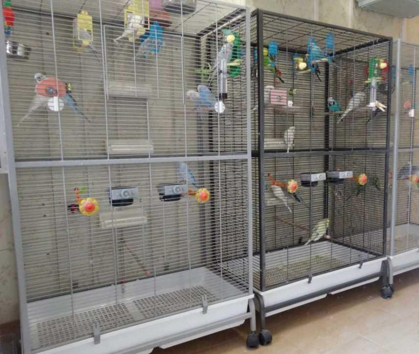 обустройство вольера для попугаев