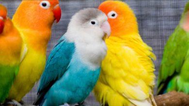 Почему попугай выщипывает себе перья