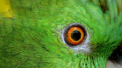Как видят попугаи