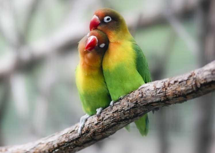 попугай из бумаги делает себе хвост