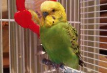Photo of Лечение зоба у попугая в домашних условиях