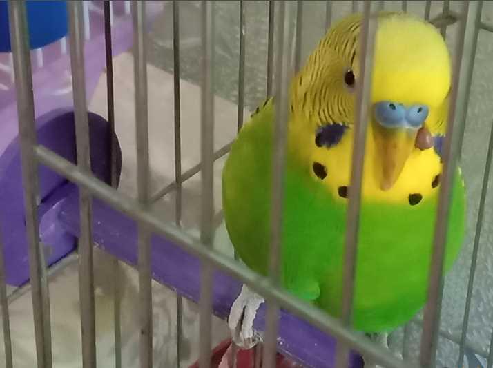 у попугая длинный клюв что делать