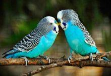 Photo of Что делать если у попугая грибок?