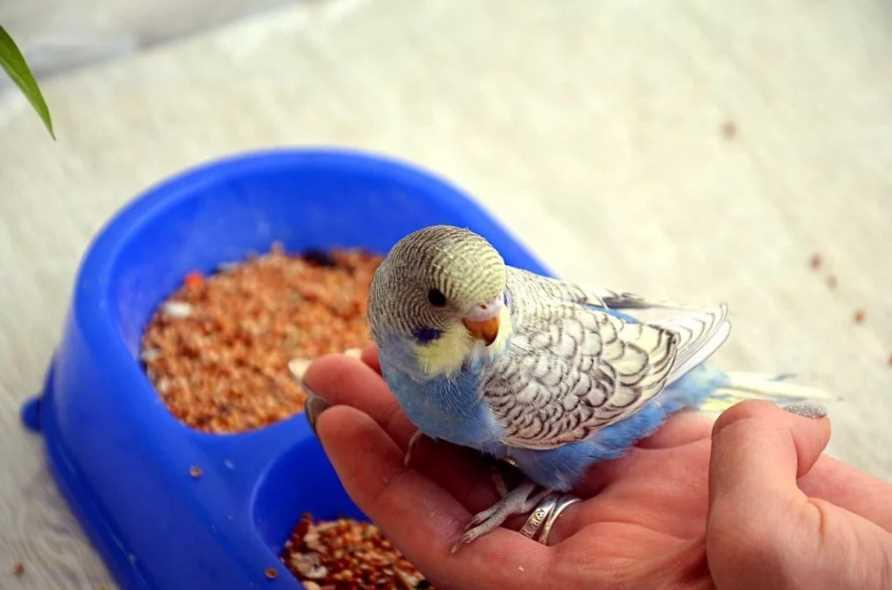 Каши для волнистых попугаев