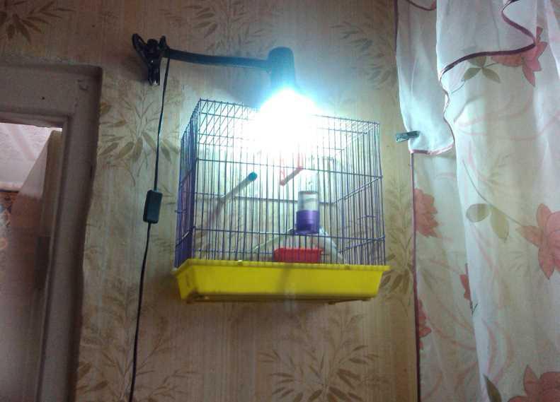 лампа для волнистых попугаев