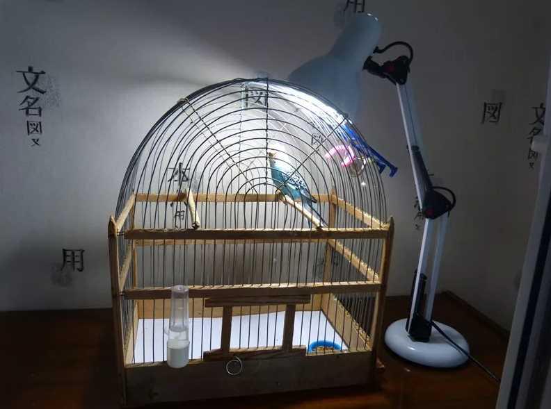 Лампа для попугаев