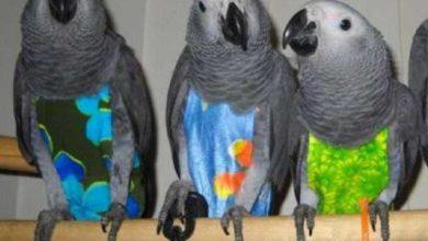 Photo of Подгузники для попугаев